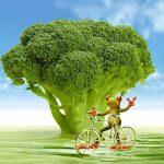 筋トレにブロッコリーが重宝される理由【豊富なビタミンやミネラル】